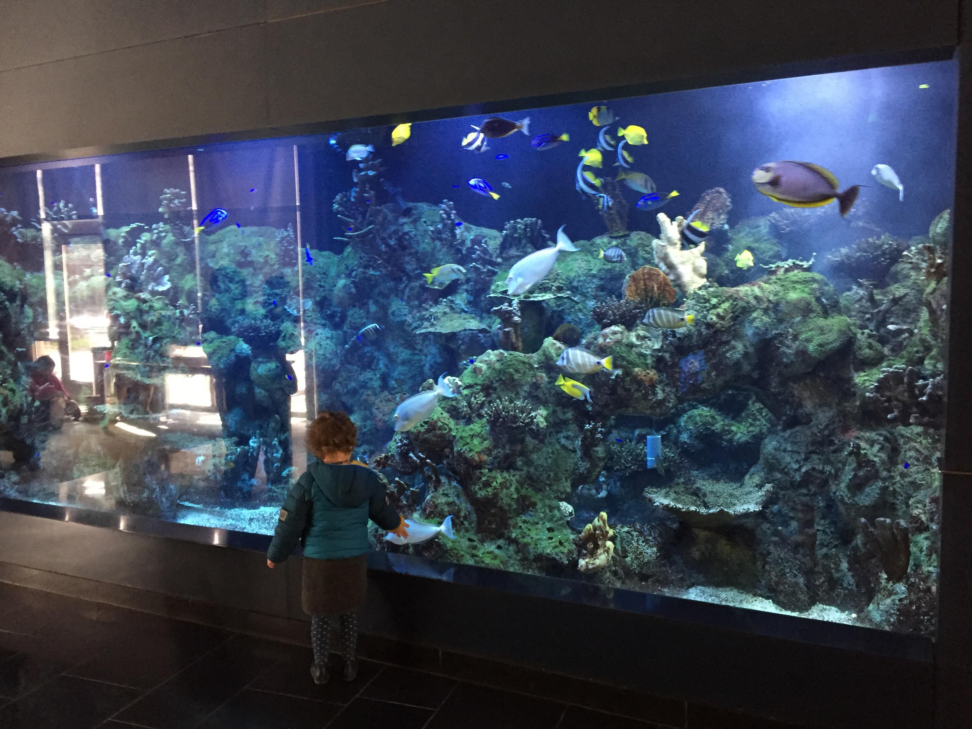 Cupertino e la biblioteca con l acquario semidiporpora for Acquario da parete
